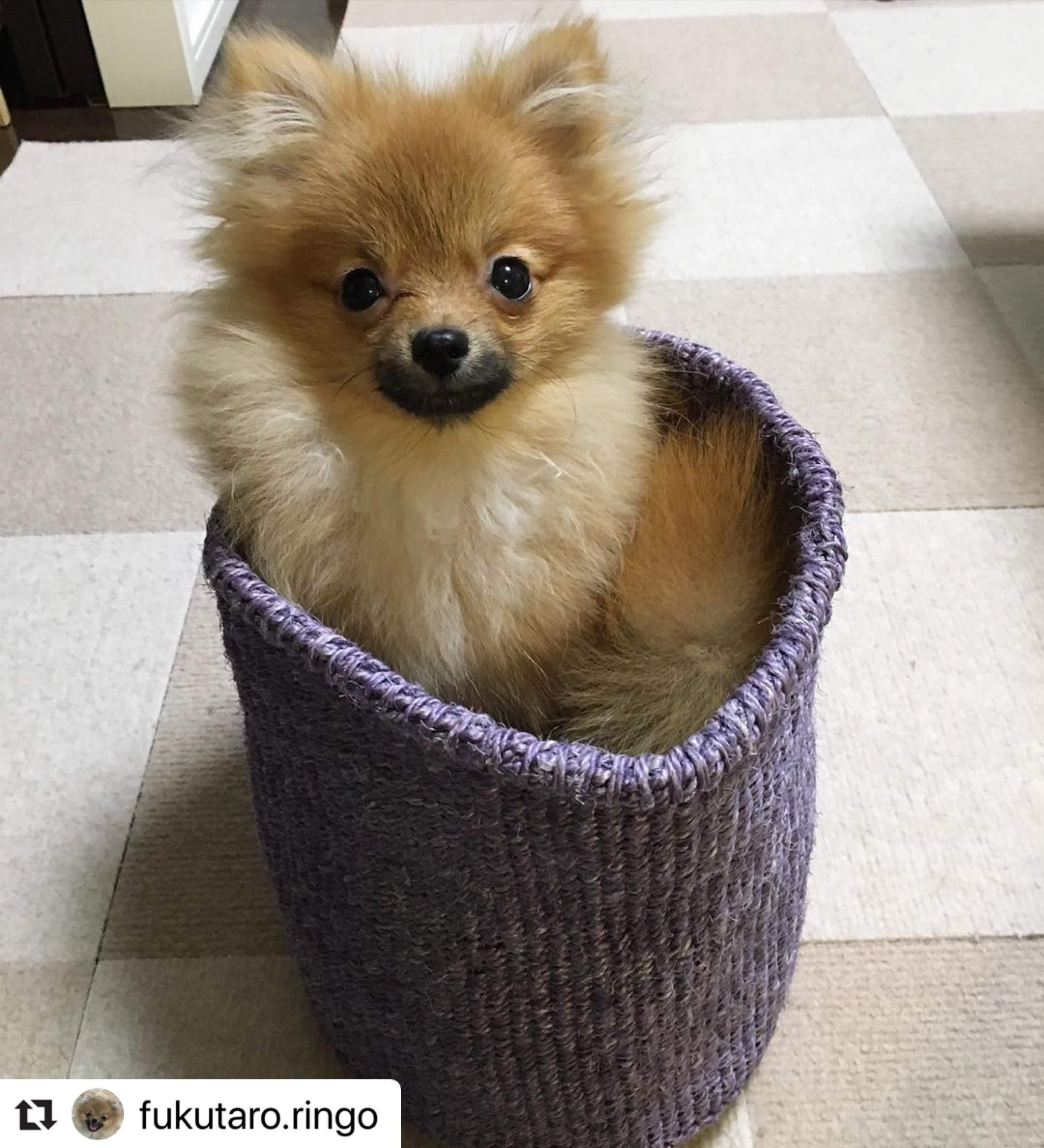 Instagramのかご犬